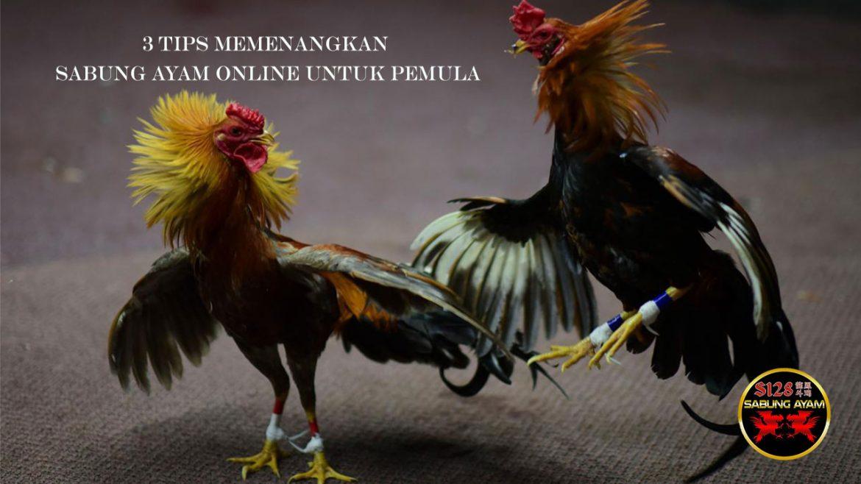 3 Tips Memenangkan Sabung Ayam Online untuk Pemula