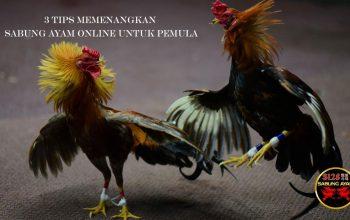 Tips Memenangkan Judi Sabung Ayam untuk Pemula